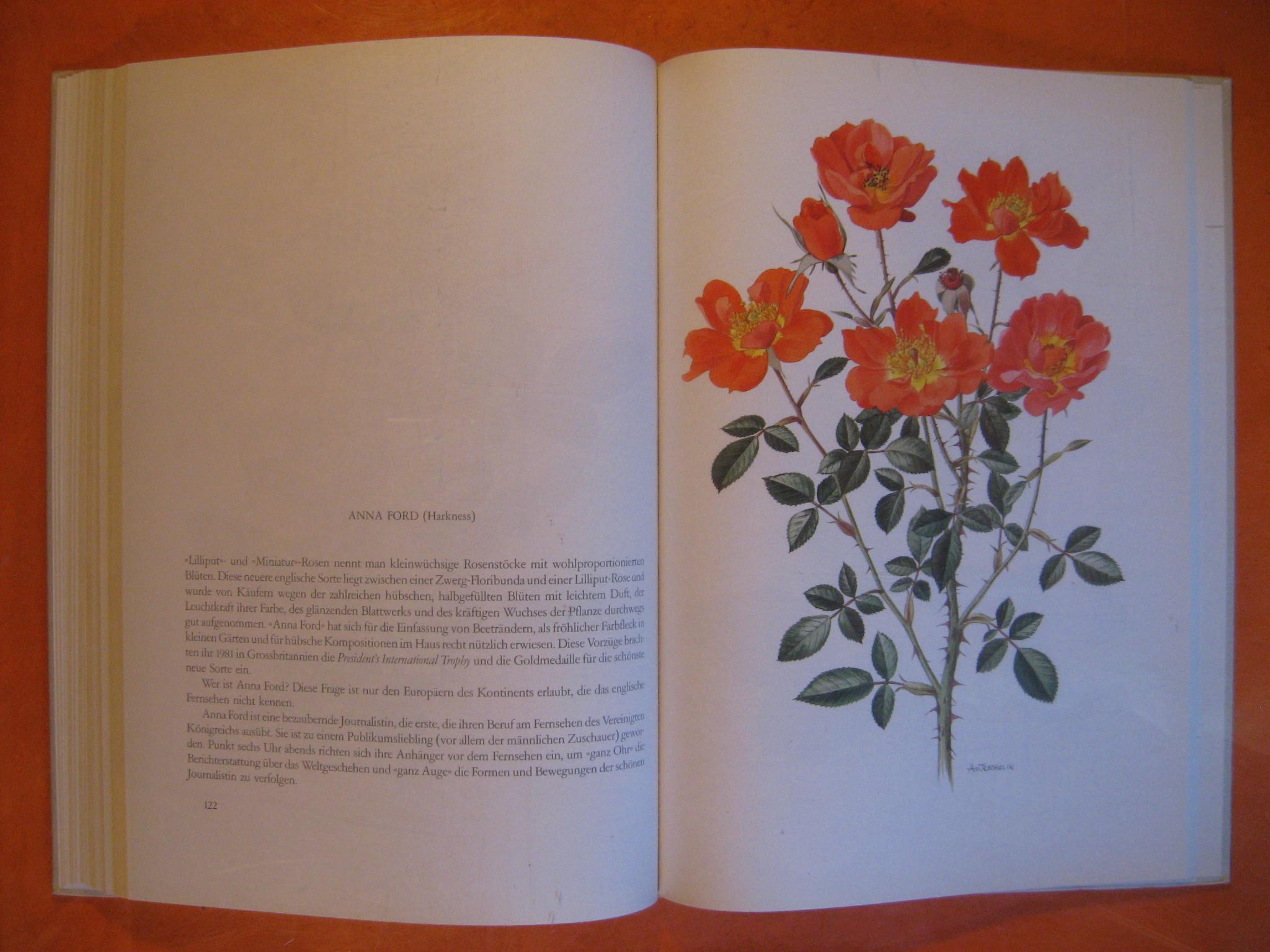 Image for Alte Rosen - neu Rosen