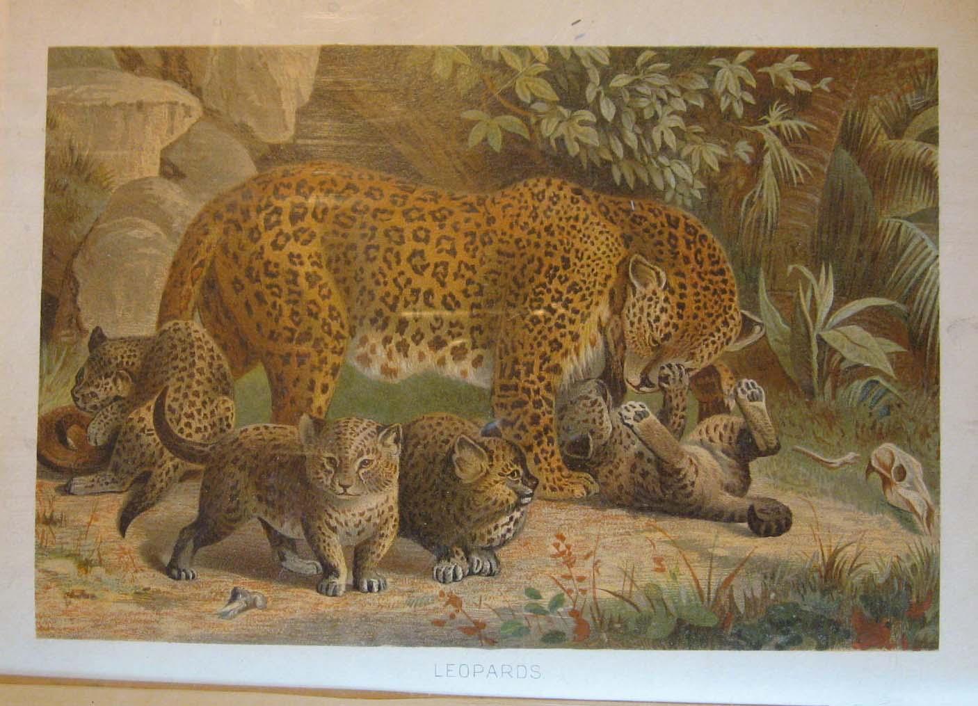 Royal Natural History Volume 1, Section 2: Mammals