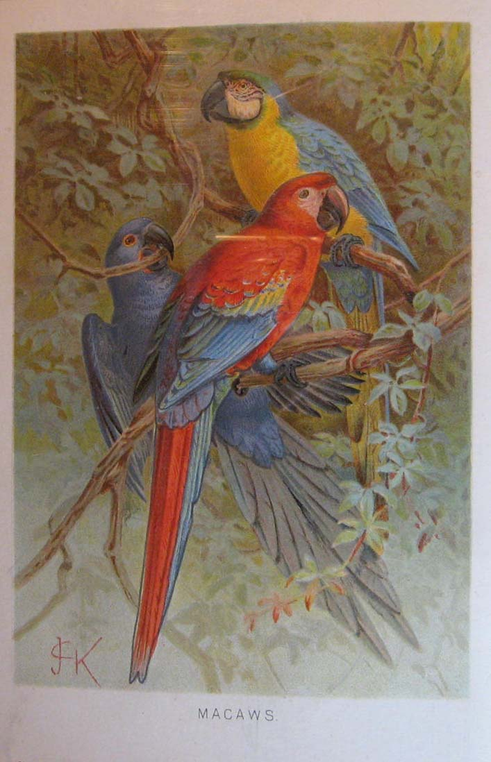 Image for Royal Natural History Volume 4, Section 7:  Birds