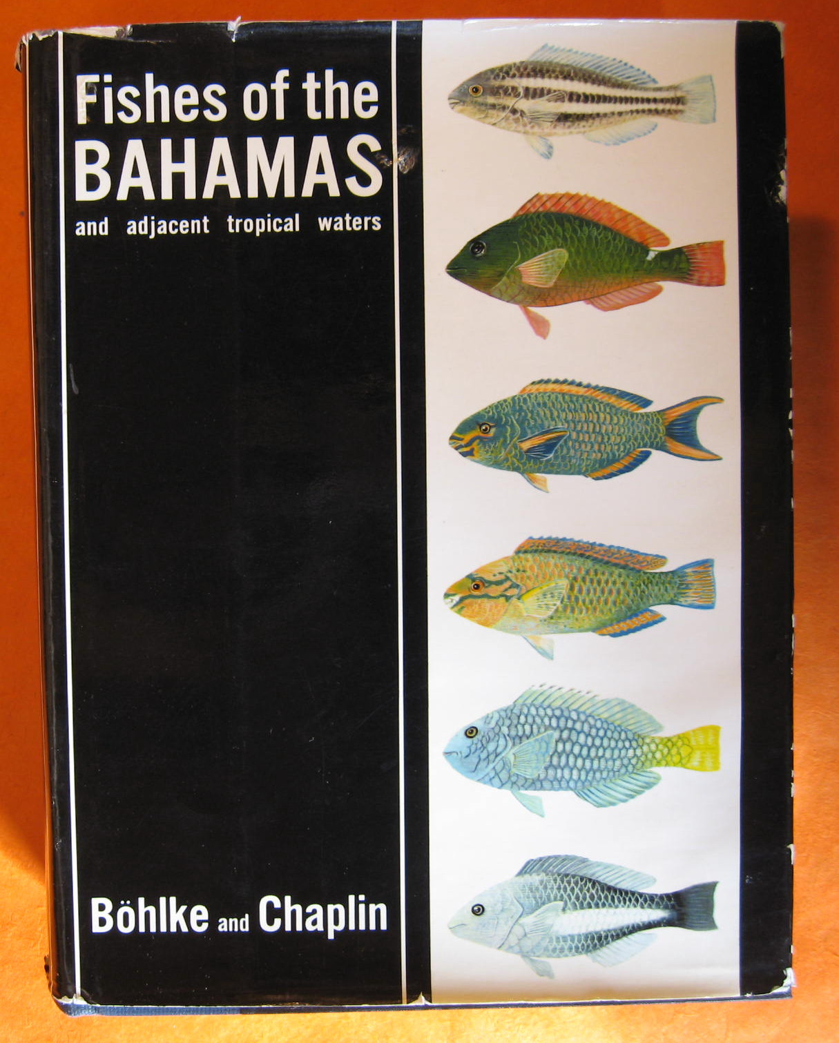 Fishes of the Bahamas and Adjacent Tropical Waters, Bohlke, James, E. & Chaplin, Charles C.G.