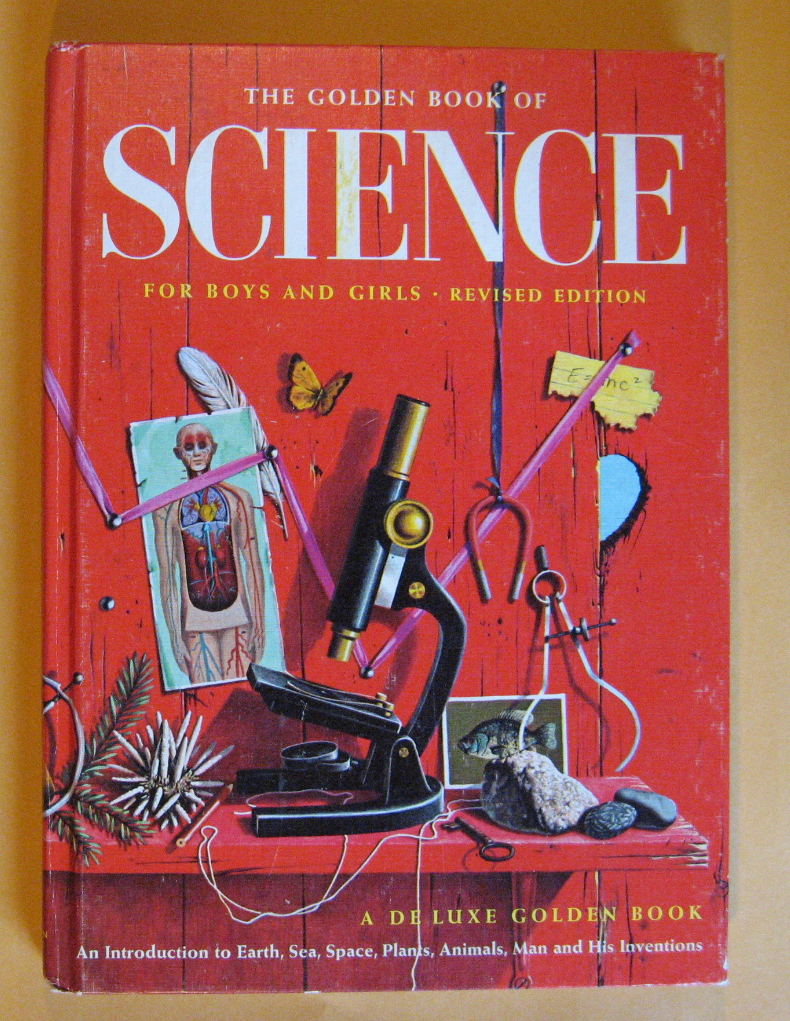 The Golden Book of Science, Packer, Bertha Morris